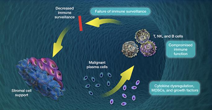 Immune System Dysfunction in Multiple Myeloma